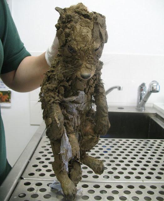¡Este misterioso animal fue encontrado cubierto en lodo!