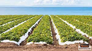 تعبير عن الزراعة وأهميتها 2019