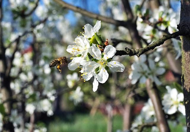 Μπορείτε να εισάγετε μέλι, αλλά δεν μπορείτε να εισάγετε επικονίαση...