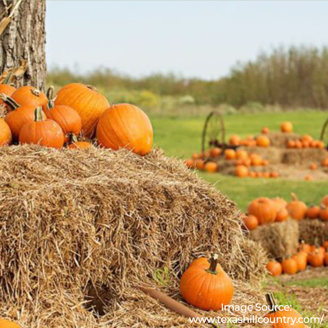 pumpkins on hay bales in a field