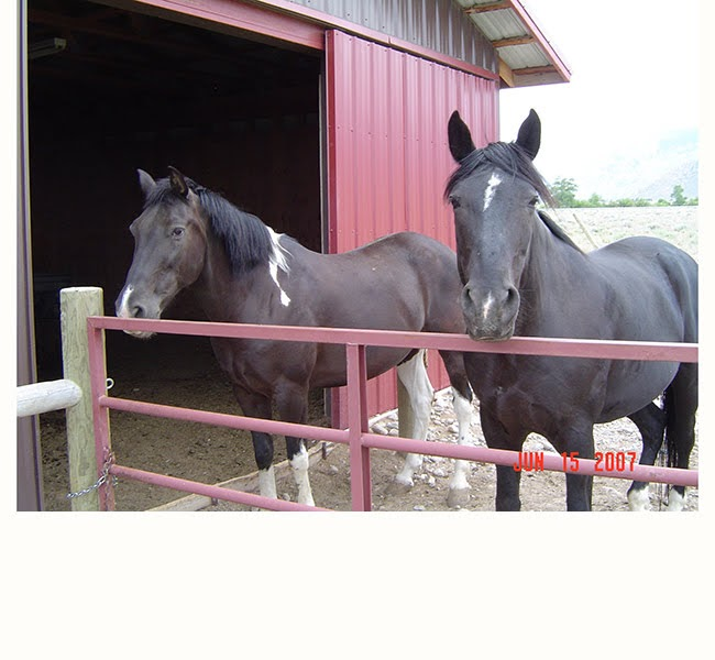 My horses Doc & Buddy