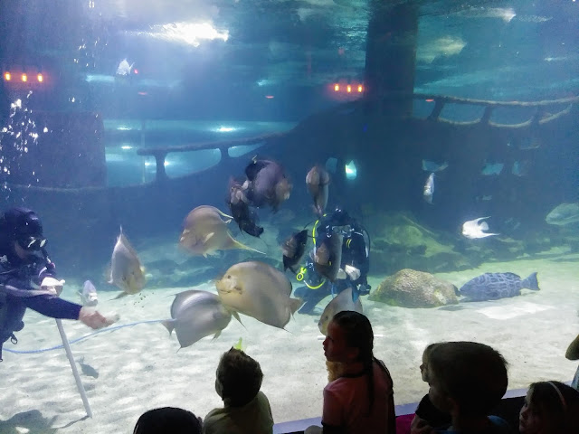 Adventure at the Greater Cleveland Aquarium