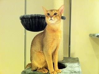 Slim cat 写真
