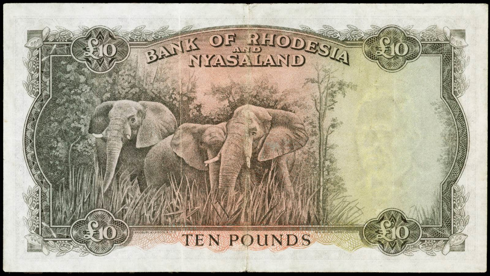Rhodesia and Nyasaland banknotes 10 Pounds note 1960 Elephants