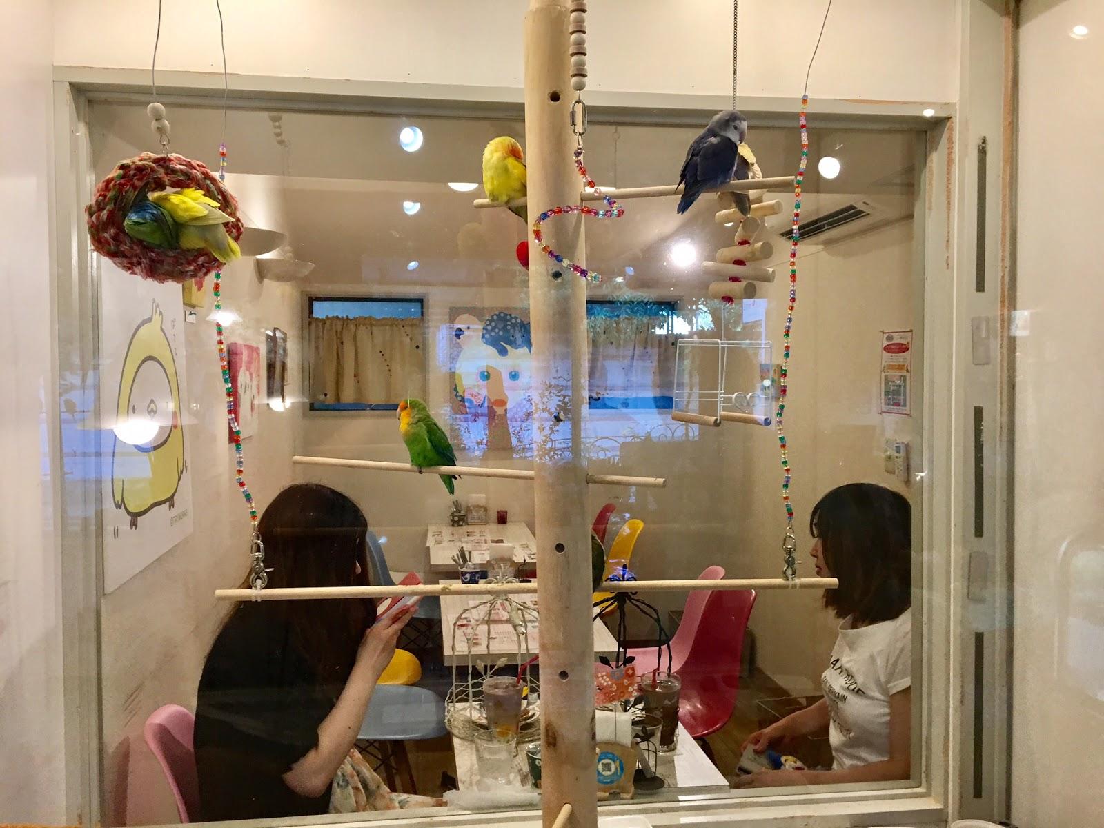 Kotori Cafe Aoyama
