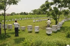 Υποβολή αιτήσεων για ενίσχυση μελισσοκόμων