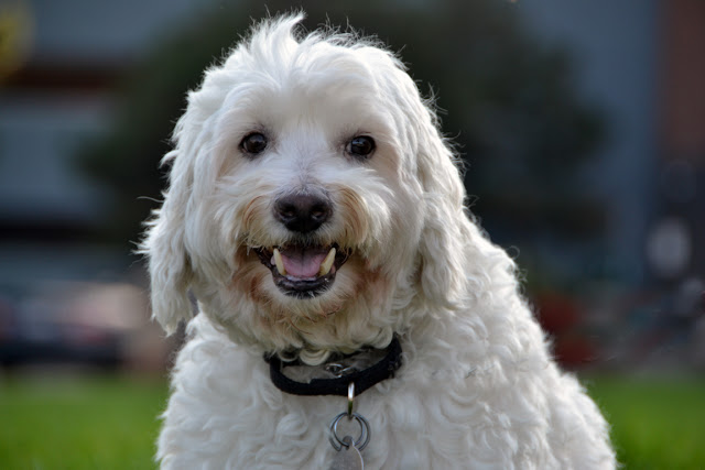 Rescue and adopt a senior dog for Adopt A Shelter Dog Month