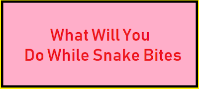 What Will You Do While Snake Bites