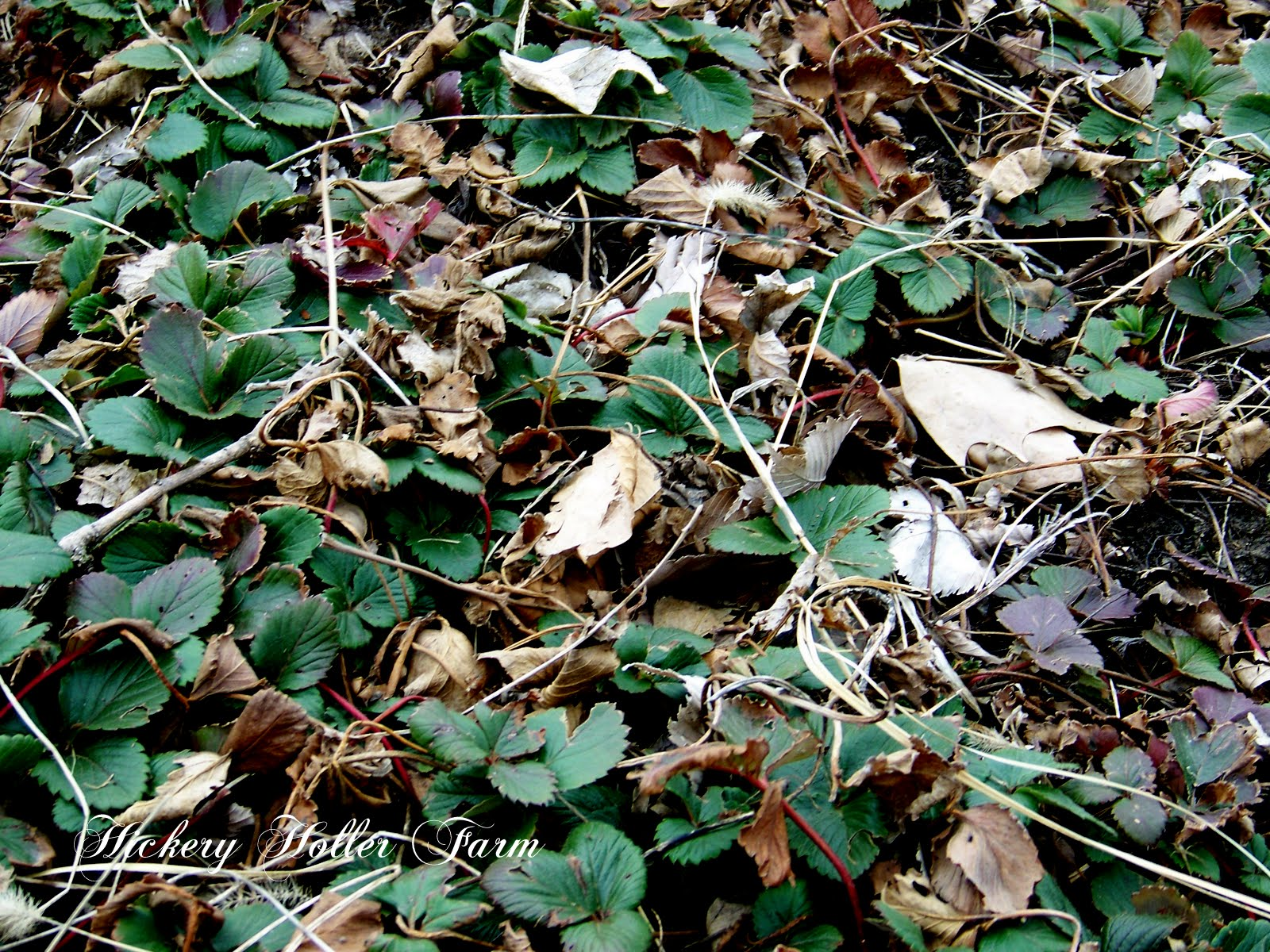 Where Put Leaves After Raking