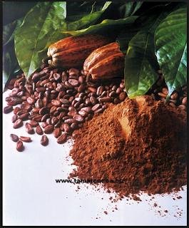 inilah Manfaat Buah Coklat (Kakao) untuk Kesehatan