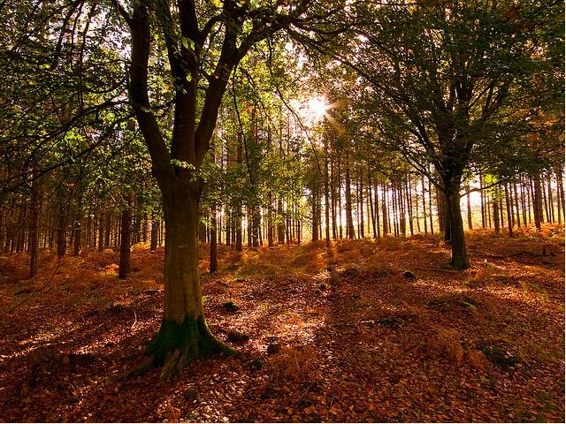 The Most Beautiful Autumn Break Destinations In The World
