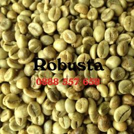 Cafe nhân sống robusta