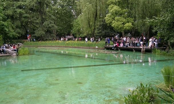大きくないプールのような池