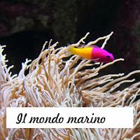 https://www.lalunadicarta.com/p/le-meraviglie-del-mare.html