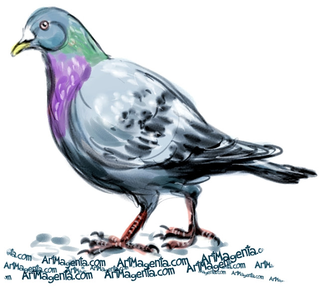 Rock Dove sketch painting. Bird art drawing by illustrator Artmagenta