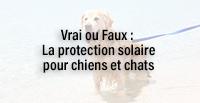 La protection solaire pour chiens et chats info ou intox ?