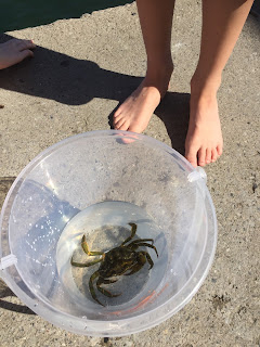 A boy's feet with a crab in a bucket - crabbing!
