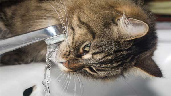 dehydration in cats meaning