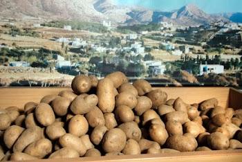 Η ιστορία της ... πεντανόστιμης πατάτας