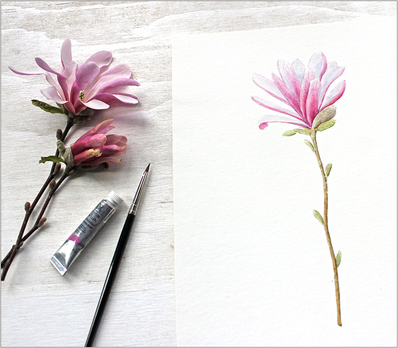 Pink magnolia watercolor painting by Kathleen Maunder