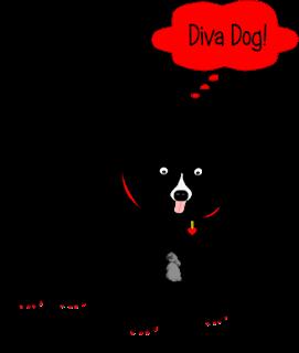 Diva Dog!