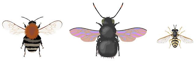 Bombus pascuarum, Abeja carpintera, mosca