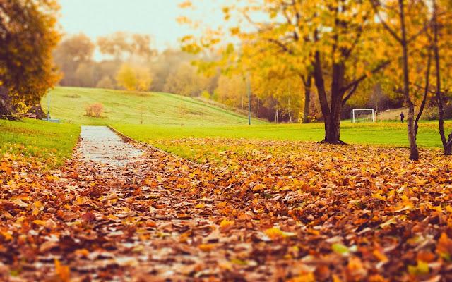 Afbeelding met afgevallen bladeren in park