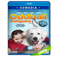 Oddball (2015) BRRip 1080p Audio Dual Latino-Ingles