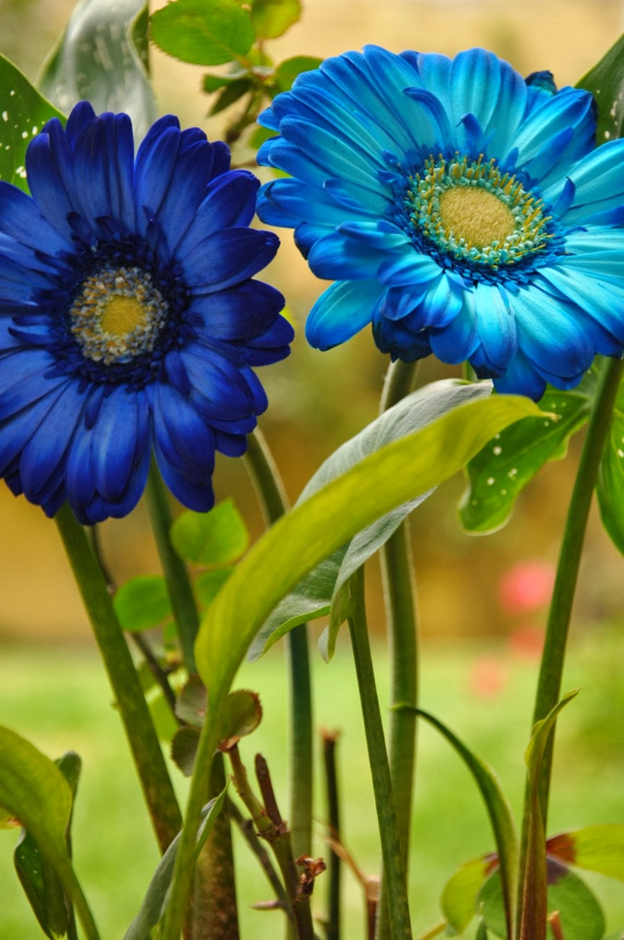 World's Most Beautiful Flowers Wallpapers || HD Wallpapers for Smartphones