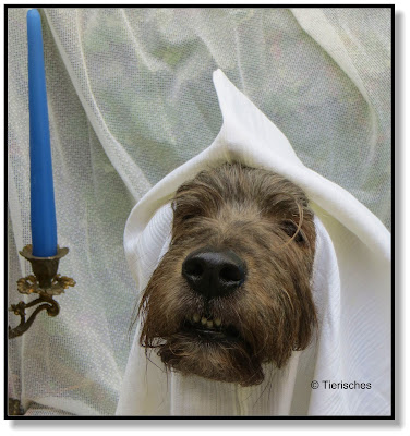 Hund zu Halloween