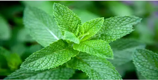 These Plants Will Get Rid Of Many Diseases Like Diabetes Grow At Home.