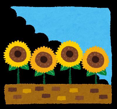 暑中お見舞いのイラスト「向日葵」