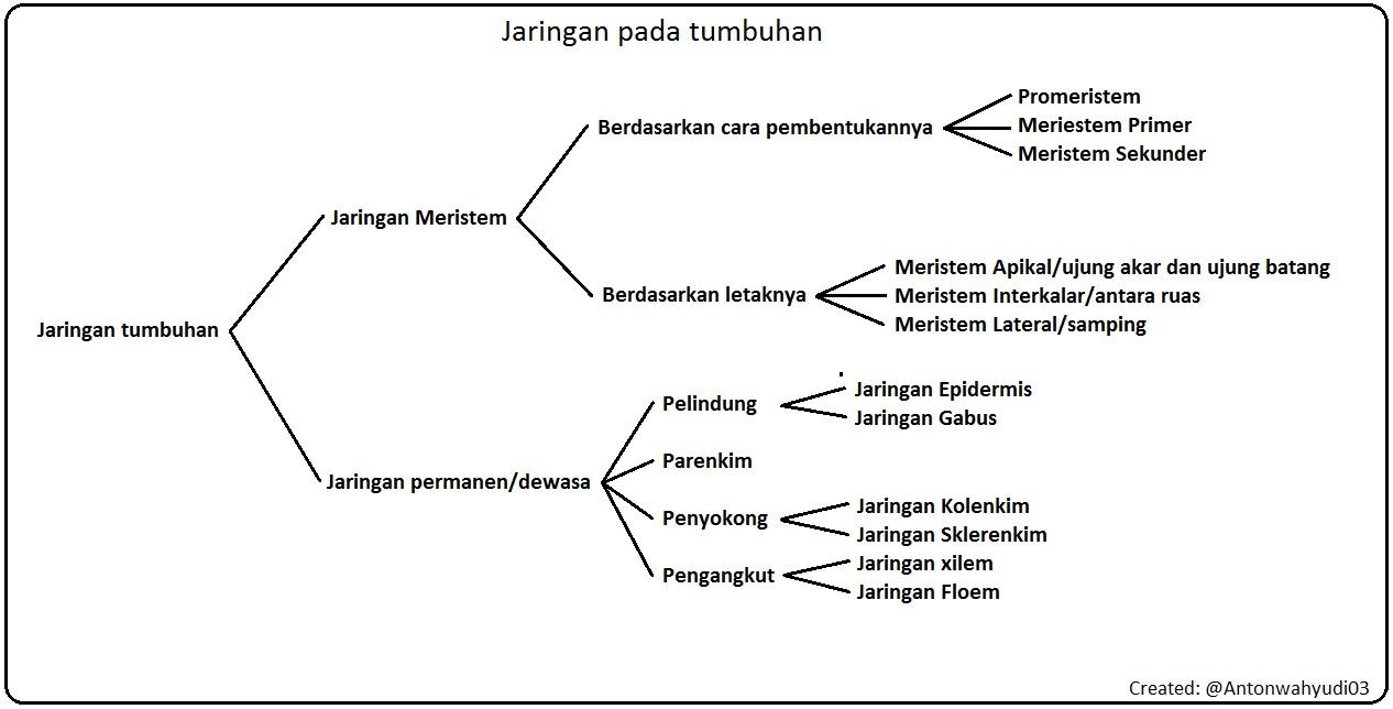Bab 2 Jaringan Tumbuhan Bio Smanda P Bun Ii