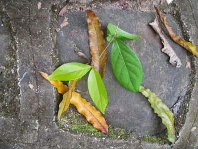 Leaf art creations with preschool children