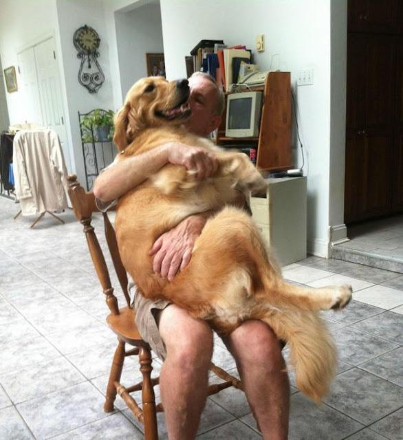 21 chú chó dù to xác nhưng lại có tâm hồn mong manh dễ vỡ