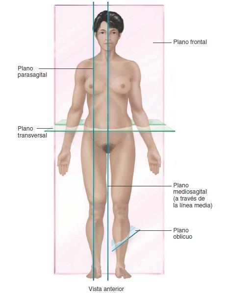Anatomía y Fisiología: POSICIONES Y POSICIONES CORPORALES