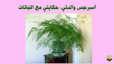 أسبرجس والدتي, حكايتي مع النباتات