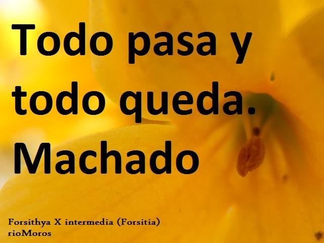 Todo pasa y todo queda Machado