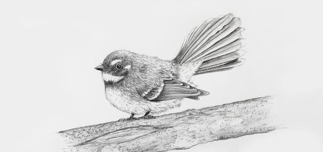 Learn how to draw a bird using sketching, tone, texture ...