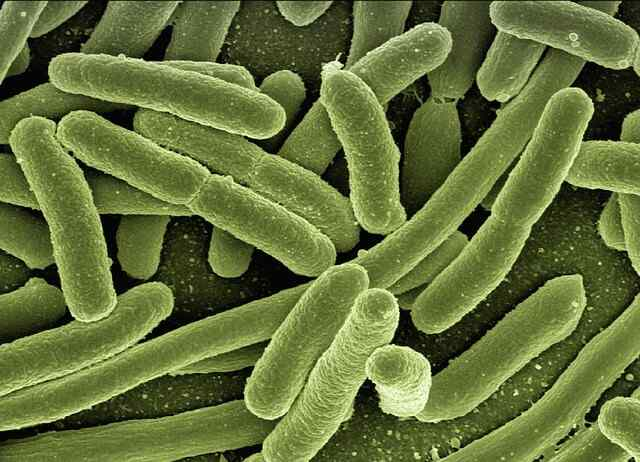 About half of your body is bacteria Science Fact