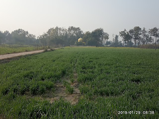 Natural Land on Wheat Plant