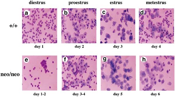 Faze polnog ciklusa Panvet dežurna veterinarska stanica Subotica