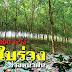 ยางพันธุ์ 600 ระวัง โรคใบร่วง ช่วงหน้าฝน กยท. ย้ำต้องดูแลป้องกันก่อนระบาด