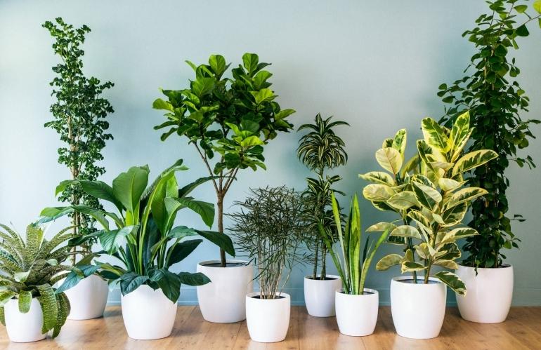 أفضل النباتات لغرفة نومك