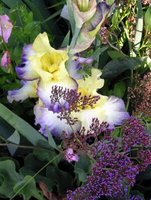 Irises In The Garden: Planting With A Dominant Color