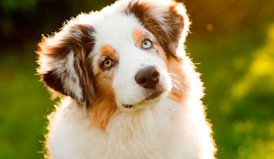 ¿Cómo eliminar los parásitos molestos de una mascota?