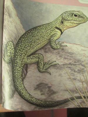 Lagarto de cobre Pristidactylus casuhatiensis