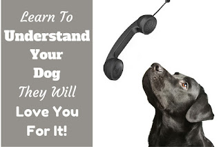 Dog Speak: Understanding What Your Dog is Telling You