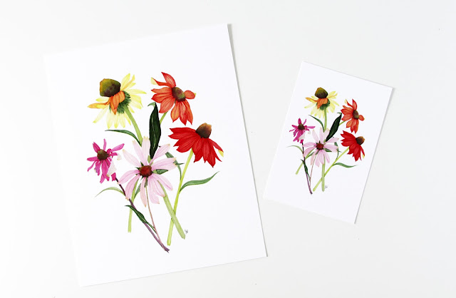 coneflowers, botanical art prints, watercolor coneflowers, Etsy, Anne Butera, My Giant Strawberry