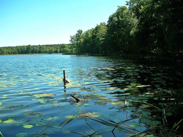 jeziora, flora, lasy, Kargowa